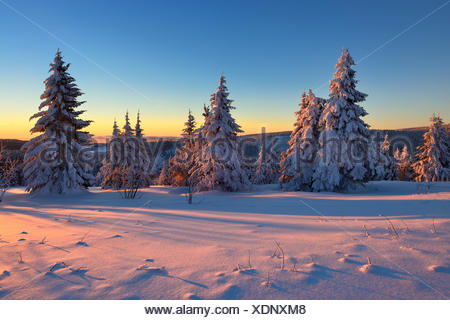 Sunset at Fichtelberg, spruces covered in snow, winter landscape, Oberwiesenthal, Saxony, Germany - Stock Photo