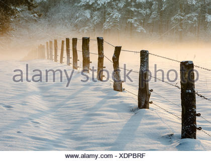 Wooden posts with barbed wire fence  in snow, Mookerheide, Netherlands - Stock Photo