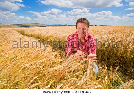 Portrait confident farmer examining sunny rural barley crop field in summer - Stock Photo