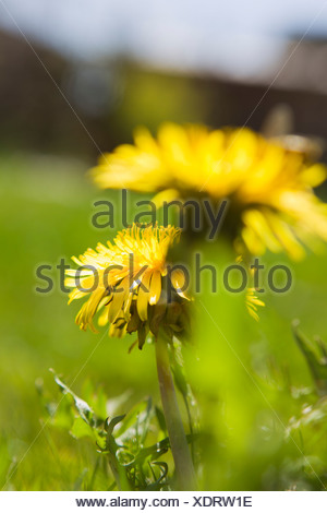 Close up of flowers growing in field - Stock Photo