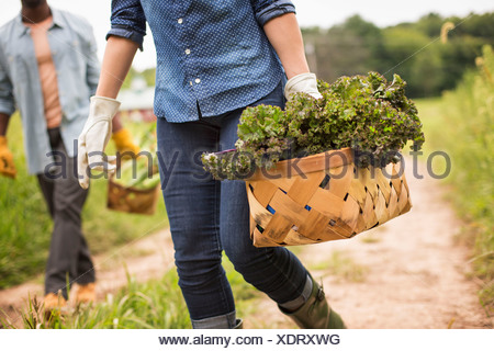 Working on an organic farm. A woman holding a handful of fresh green vegetables, produce freshly picked. - Stock Photo