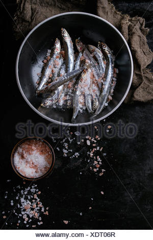 Lot of raw fresh anchovies fishes in black ceramic bowl with pink and sea salt over black metal background. Top view. Sea food background theme with s - Stock Photo