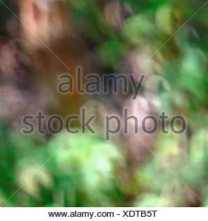 bokeh bacgground - Stock Photo