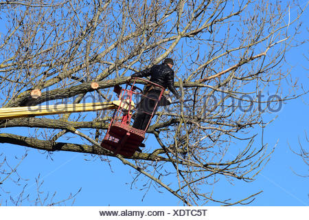 Pruning trees using a lift-arm - Stock Photo