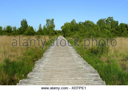 National Park Groote Peel, woodway through highmoor, Netherlands, Limburg, Groote Peel - Stock Photo