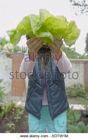 Young girl in garden holds up lettuce - Stock Photo
