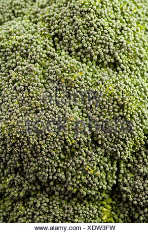 Close up of broccoli - Stock Photo