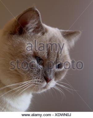 profile blue macro close-up macro admission close up view pet dreamy portrait - Stock Photo