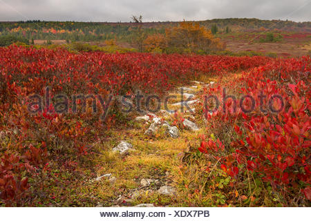 Rocky pathway through red leaves Dolly Sods - Stock Photo