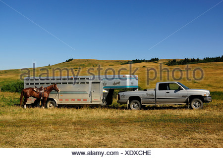 Horse standing tied to a horsebox transporter on the prairie, Saskatchewan Province, Canada - Stock Photo