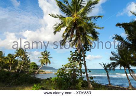Palmenstrand bei Baracoa, Provinz Guantanamo, Kuba Engl.: Cuba, Provinz Guantanamo, Baracoa, beach, palm trees - Stock Photo