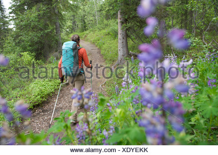 Woman hikes through Nootka lupine during a backpacking trip on Resurrection Pass Trail in the Chugach National Forest, Alaska - Stock Photo