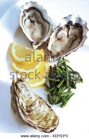 Fresh oysters with seaweed and lemon slices - Stock Photo