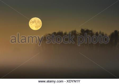 Vollmond ueber im Moor aufsteigendem Bodennebel, Deutschland, Bayern, Grabenstaetter Moor | full moon over ascending mist on moo - Stock Photo