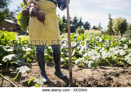Woman holding freshly harvested rutabaga in vegetable garden - Stock Photo