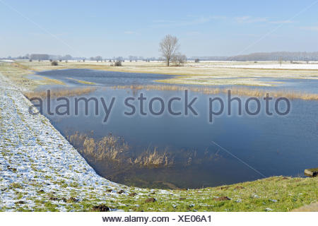 flooded snowy field landscape of Lower Rhine region, Germany, North Rhine-Westphalia, Lower Rhine, Schenkenschanz - Stock Photo
