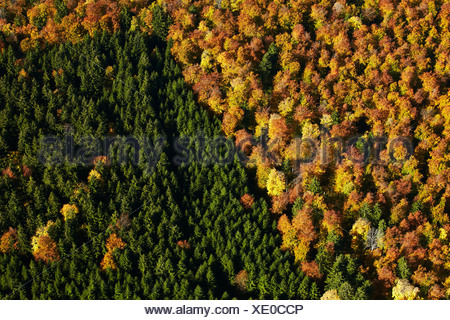 Autumnal broadleaf and conifer forest, aerial photo - Stock Photo