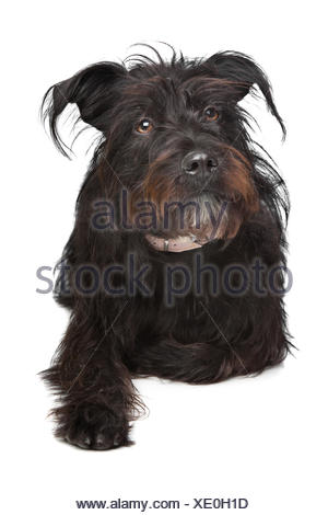 black mixed breed dog - Stock Photo
