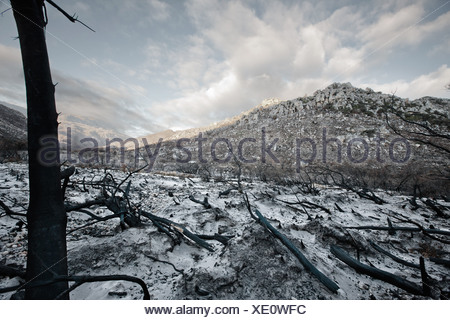 Bare trees and rocks in snowy field - Stock Photo