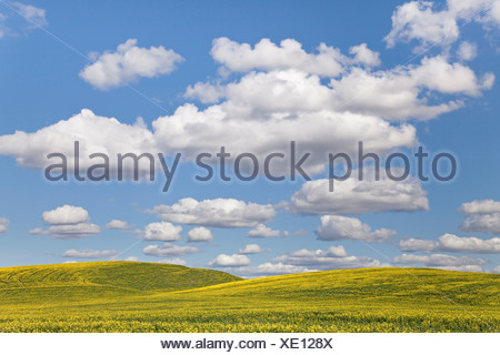 Cloudy Sky, Washington, USA - Stock Photo