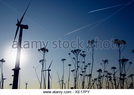 Silhouettes of plants and wind turbines - Stock Photo