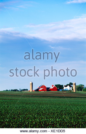 Farmstead with white house, red barns, silos and a field of early growth grain corn in the foreground / Genoa, Illinois, USA. - Stock Photo