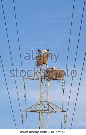 Spain, Sierra de Almenara, Stork Nests on pylon - Stock Photo