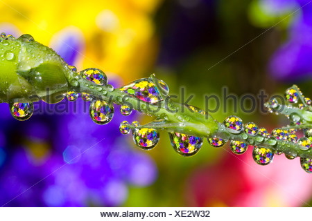 Water drops on a flower stem - Stock Photo