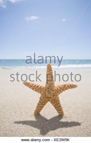USA, Massachusetts, Cape Cod, Nantucket, close up of starfish on sand - Stock Photo