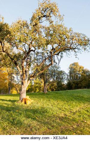 Trees growing in rural field - Stock Photo