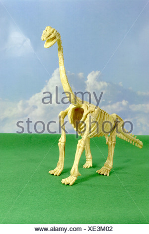 The brachiosaurus seemed also to arm lizard mentioned in the jurassic, had a weight of approx. 80 tons, a length of approx. 23 m - Stock Photo