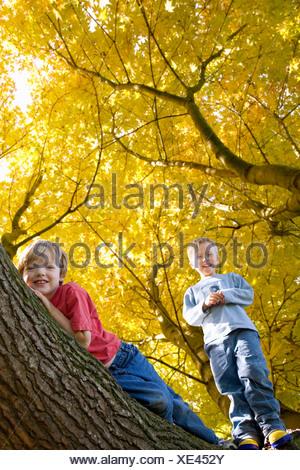 Boys climbing tree with autumn leaves - Stock Photo