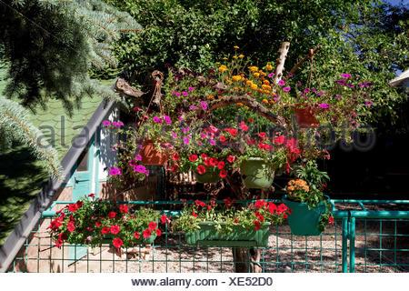 Beautiful Petunia Flowers In Garden Design Stock Photo 244848958
