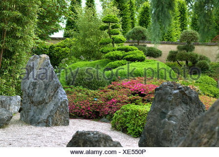 Azalea (Rhododendron obtusum), blooming in a Japanese garden - Stock Photo