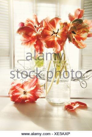 Fresh spring tulips in old milk bottle with blur baclground - Stock Photo