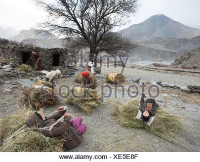 Women on their daily trek to get wood for cooking and heating and hay to feed their livestock, a two hour walk. - Stock Photo