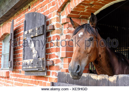 Stud in Masuria - Stock Photo