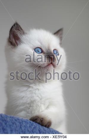 sweeeet - Stock Photo