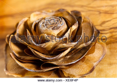 macro close-up macro admission close up view detail optional brown brownish brunette pine advent blank european caucasian fir - Stock Photo