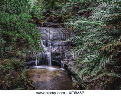 Australia, New South Wales, Blue Mountains National Park, Leura Cascades, Waterfall in forest - Stock Photo