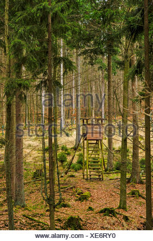 Norway spruce (Picea abies), raised hide in s spruce forest, Germany, North Rhine-Westphalia, Sauerland, Arnsberg Forest Nature Park - Stock Photo