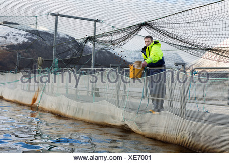 Worker at salmon farm in rural lake - Stock Photo