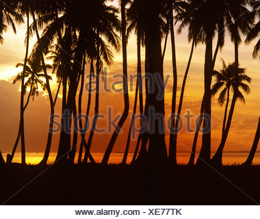 Beach with palm trees at sunset, Moorea, French Polynesia, South Pacific, Oceania - Stock Photo