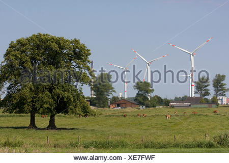 Wind power, plants, Büsum, Schleswig-Holstein, North Germany, Europe, landscape, nature, Eiderstedt, - Stock Photo