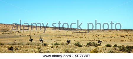Landscape at Darling South Africa - Stock Photo