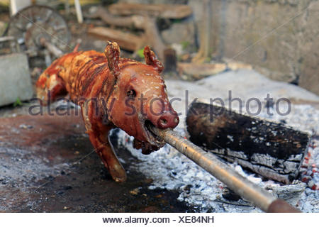 Just roasted suckling pig on a spit - Stock Photo