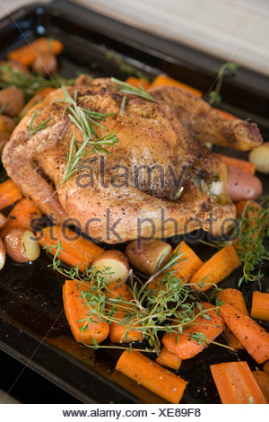 A roast chicken on a baking tray with rosemary, carrots, potatoes and sweet potatoes - Stock Photo
