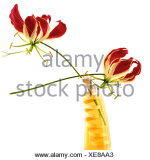 Red orchid in a yellow vase on a white background - Stock Photo