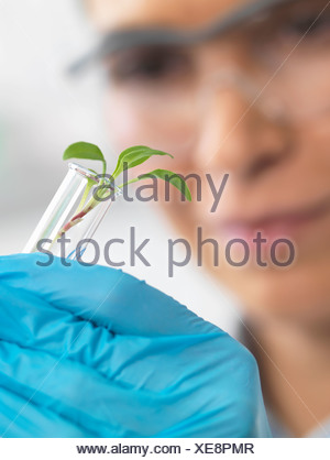 Scientist viewing seedling in test tubes under trial in lab - Stock Photo