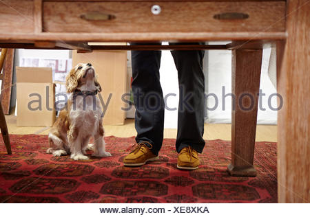 Mans legs and dog looking up in picture framers workshop - Stock Photo
